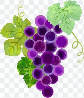 葡萄單品圖01