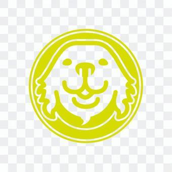 Golden retriever Moe yellow color