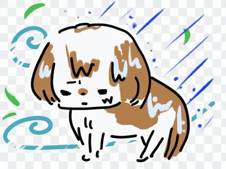 台風 大雨 風