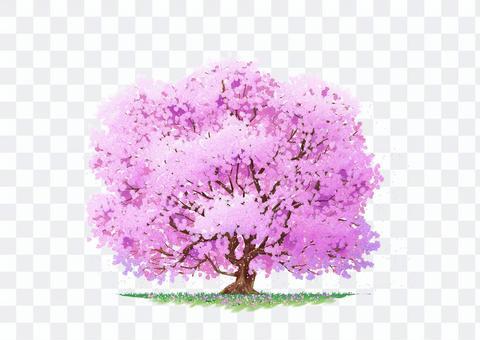盛開的自然插圖櫻花樹