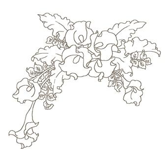 Color lily frame