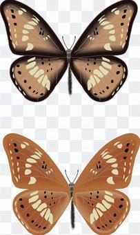 アサマイチモンジ 蝶 蝶々