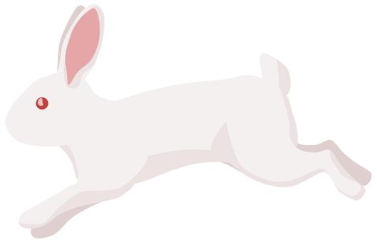 Rabbit white rabbit running