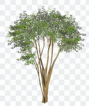符號樹·Cimmetronelico