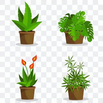 盆栽植物收藏