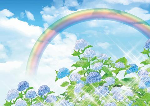 Rainbow and hydrangea