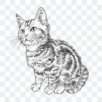 アメショー猫の絵/手描き白黒イラスト
