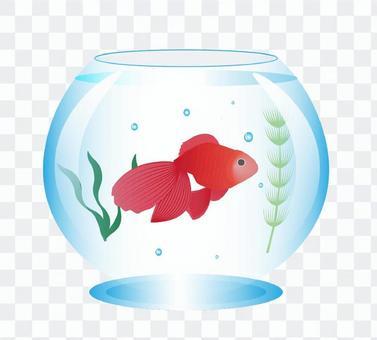 金魚和魚缸的插圖