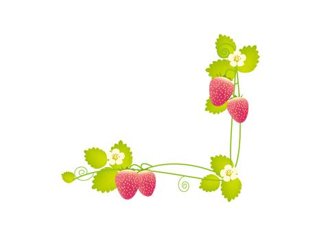 在草莓框架下