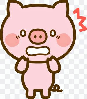 Shocked pigs