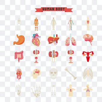 說明的人體