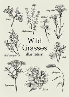 野草のイラスト