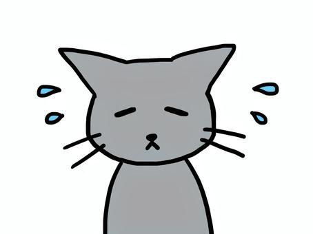 A depressed cat