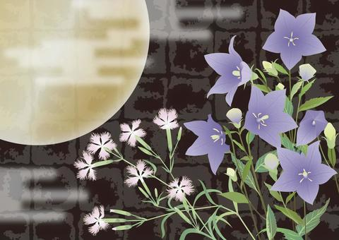 Hikibu和Kikyo __月亮在黑漆地面