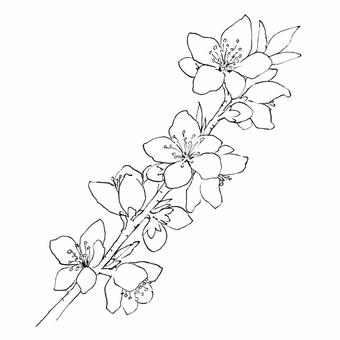 Peach blossoms _ line drawing
