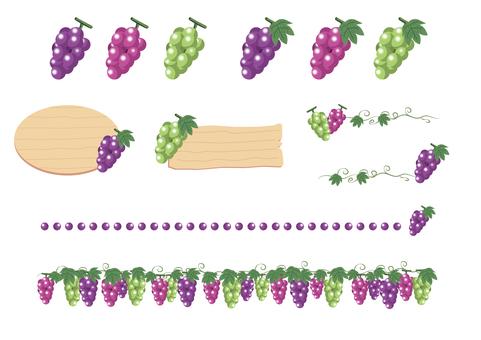 3種葡萄插圖集