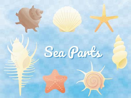 いろんな貝 水彩風