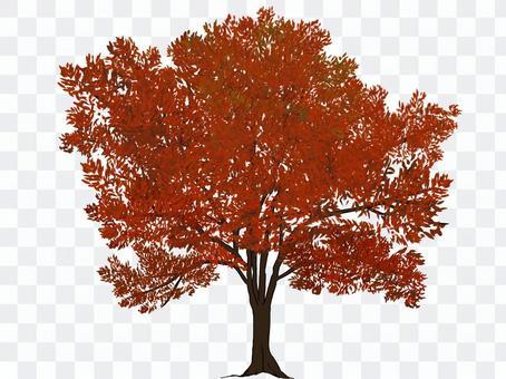 街路樹(紅葉・赤)
