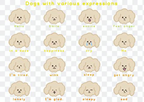 富有表現力的米色狗