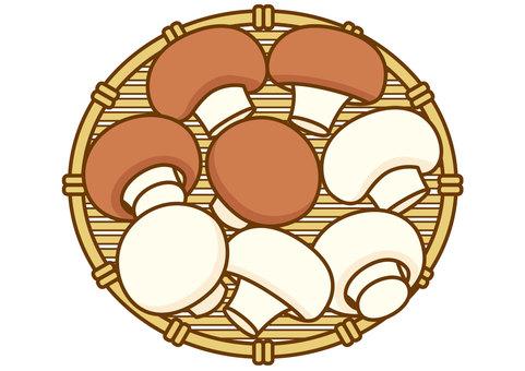Mushroom-4c