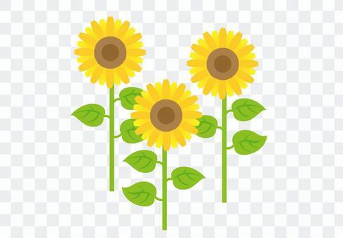 向日葵的圖案