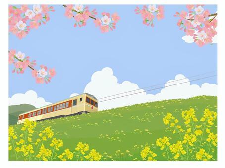 櫻花,油菜花和火車