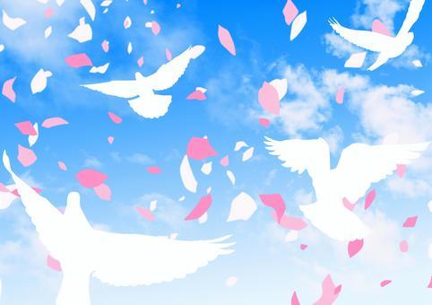 青空に舞う花びらと鳥