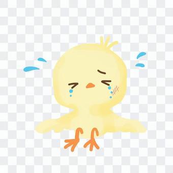 一隻摔倒而哭泣的小雞