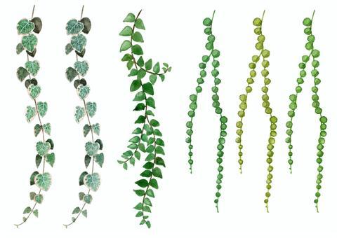 水彩観葉植物ハートカズラ・ミドリノスズ