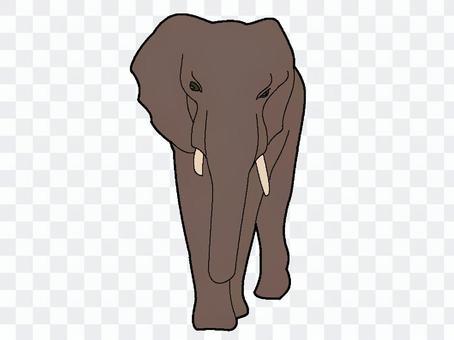 大象(棕色)