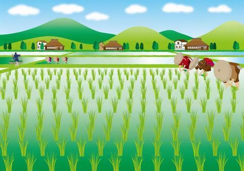 水稻種植01