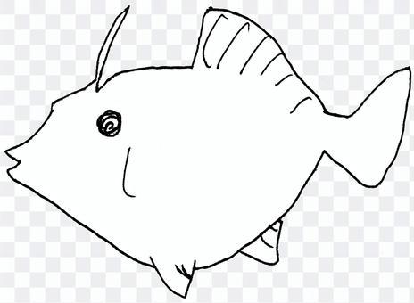 Kawahagi
