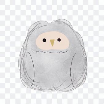 可愛的貓頭鷹