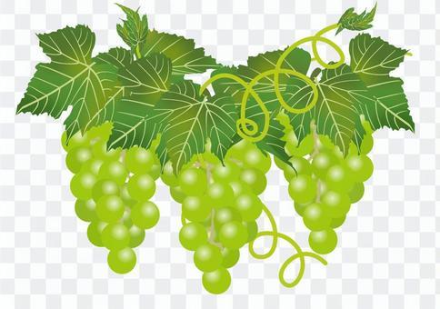 美味的葡萄19