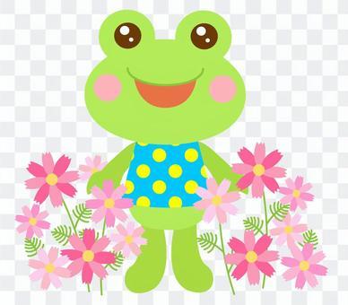 コスモス 花 秋 かえる 蛙 2