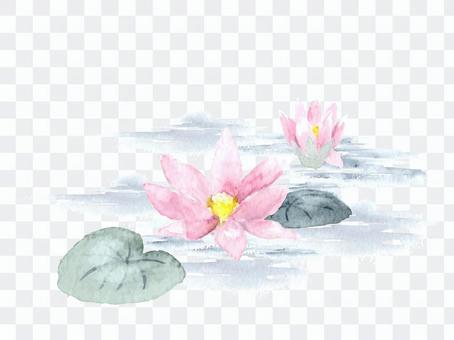 與水彩荷花的蓮花圖畫