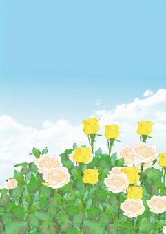 黃色和白色的玫瑰背景