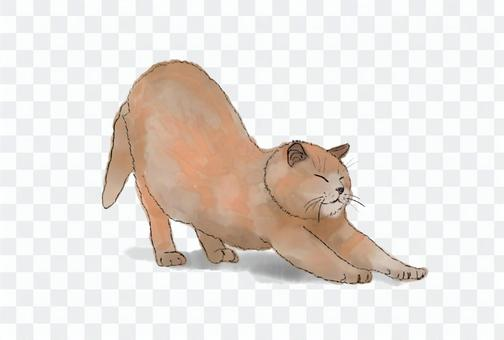 Illustration of a growing cat