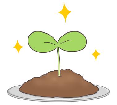 접시의 떡잎