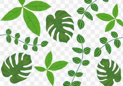 室內植物壁紙