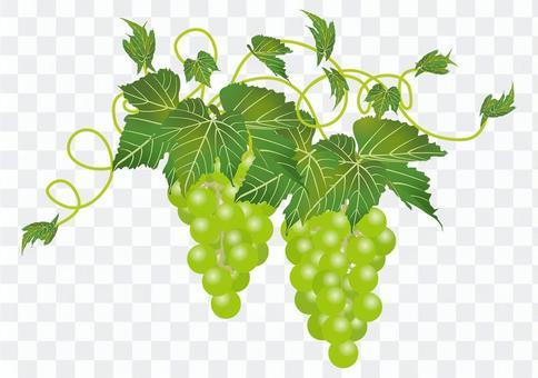 美味的葡萄15