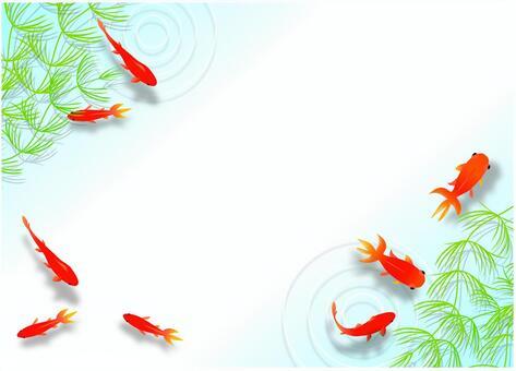 金魚舀金魚2
