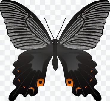 黑蝴蝶蝴蝶