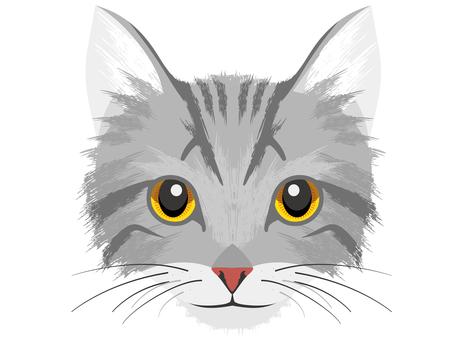 Cat B Sabatra