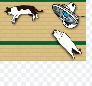 Cats and fans on tatami mat