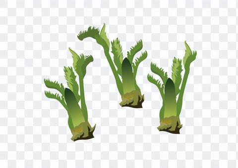 vegetable_ 타라노 싹