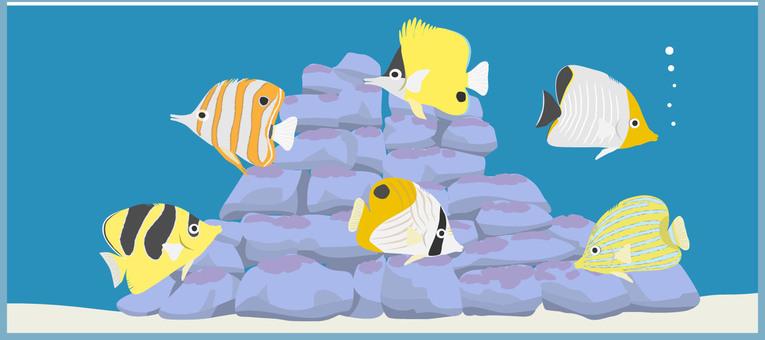 海水水槽2チョウチョウウオ