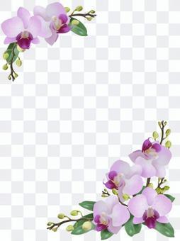 胡蝶蘭 イラスト2