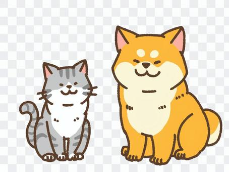 Shiba and cat