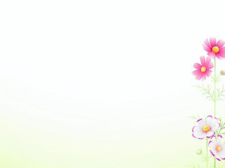 秋向け・シンプルコスモスのフレーム27